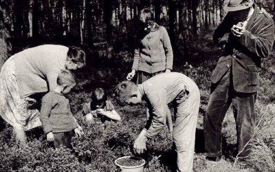 Bosbessen plukken en 6 andere nieuwe verhalen van Nijenhuis